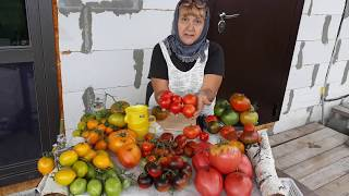 Как я собираю семена томатов!!! ЗАКАЗ СЕМЯН!!!