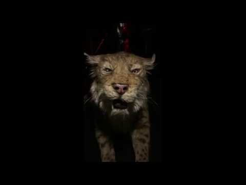 Behind the scenes - Saber toothed Cat - The La Brea Tar Pits and Museum - Ice Age Encounters