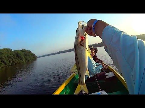 Pesca de Robalo en la Caimanera en Colombia Snook Fishing