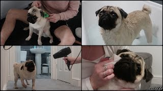 Pablo's Monthly Groom Routine