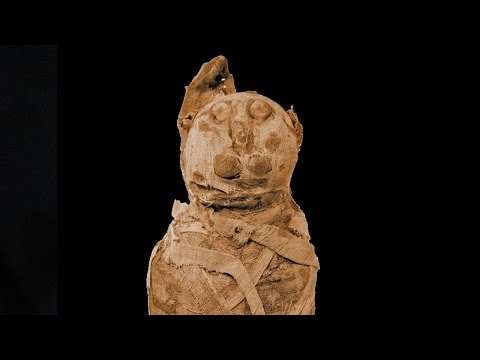 Ancient Egyptian Mummies Get Cat Scanned