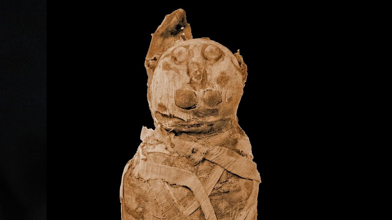 Unearthing the Mummy Cat: Egypt's Esoteric Traditions | The New Leam