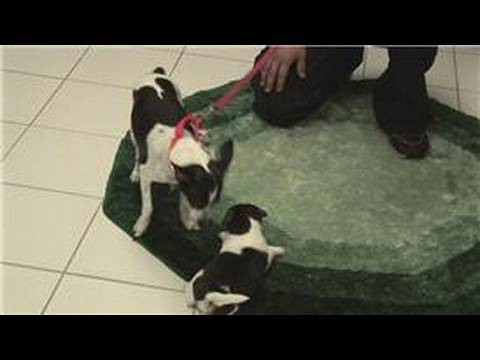 Pet Care When Do Puppies Eyes Ears Open Youtube