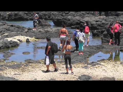 Hawaiian monk seals - Neglected at Ka'ena Pt