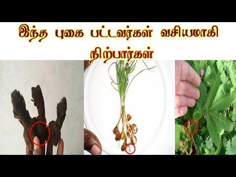 வசிய புகை தயாரிக்கும் முறை -Vasiyam Tamil