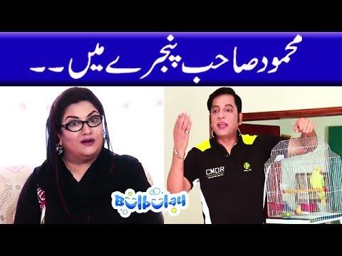 Mehmood Sahab Pinjaray Mein   Bulbulay