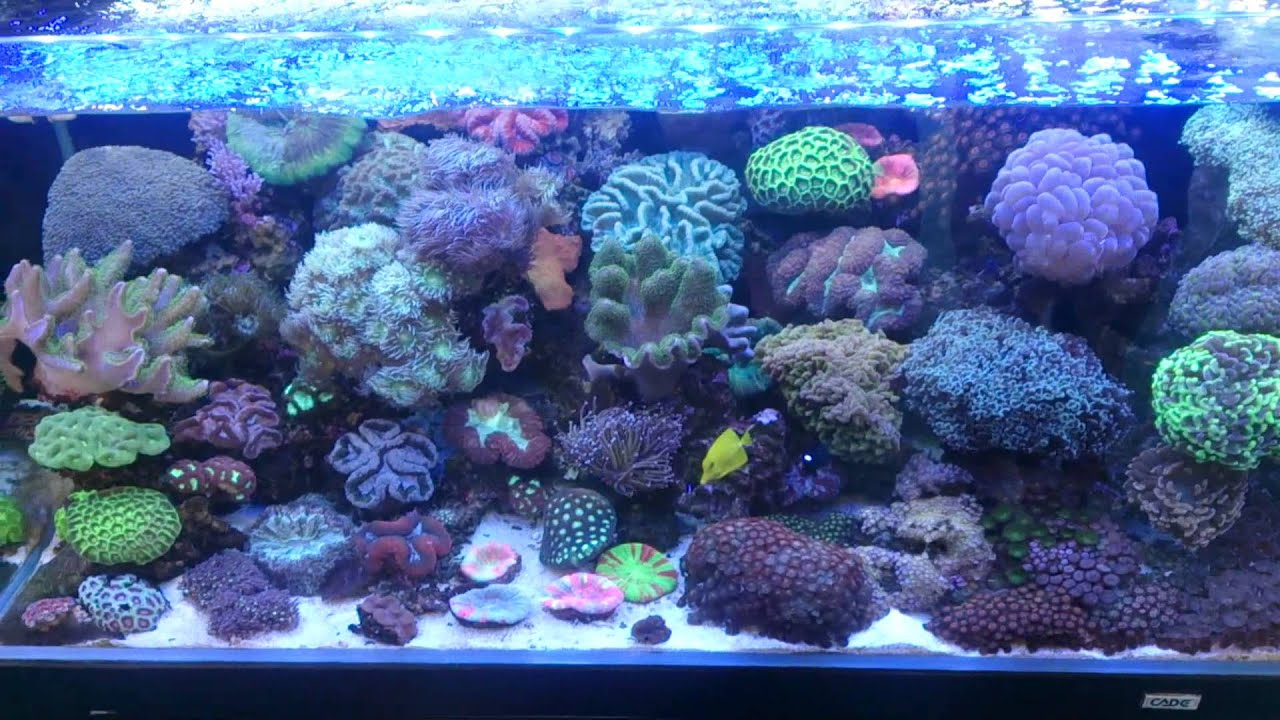 Majestic aquariums now do small saltwater delivery youtube for Small saltwater fish tank