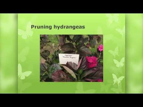 OSU Master Gardener: Spring Gardening Tips
