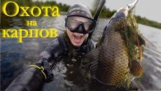 Подводная охота на карпа в мелководье(В Челябинской области осталось ещё немало болот с карпом, в подтверждение этому у меня получилось снять..., 2015-08-16T16:51:46.000Z)