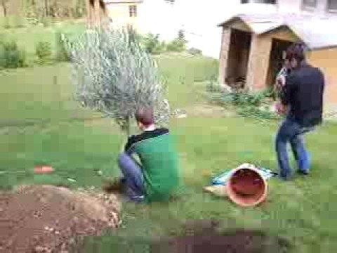 Plantation de l 39 olivier youtube - Psylle de l olivier ...