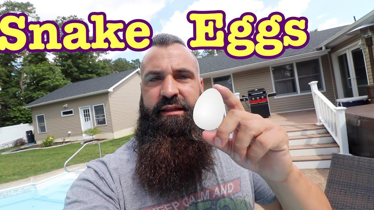 Dumpster Snake Eggs + Snakes for Sale!