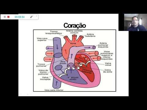 enfermagem-1---anatomia-e-fisiologia-humana-básica