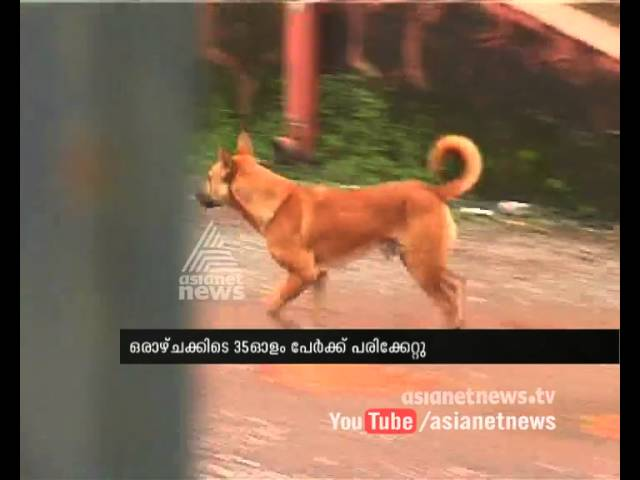Stray dog attack increases in Kannur Corporation