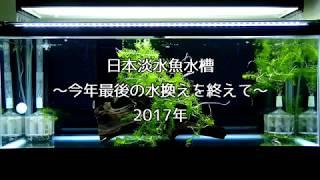 日本淡水魚水槽 〜今年最後の水換えを終えて〜 2017年