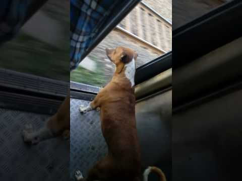 Dog at Mumbai local train travel from kalyan to dombivali station