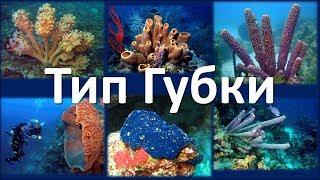 4. Тип Губки (7 класс) - биология, подготовка к ЕГЭ и ОГЭ 2019