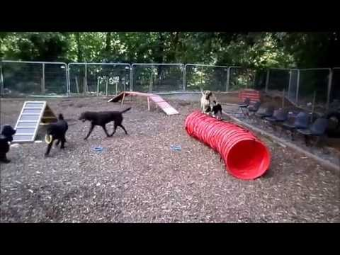 Dales Den - An Adventure Playground For Dogs