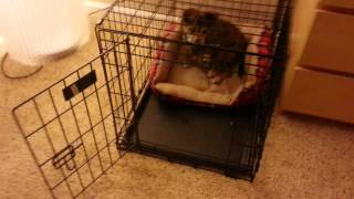 Re-crate Training At 14