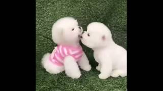 Very funny dogs! So cute!