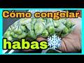 Cómo CONGELAR HABAS sin vainas | Congelar verduras fácil