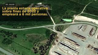 UPM volverá a construir una planta de celulosa en Uruguay