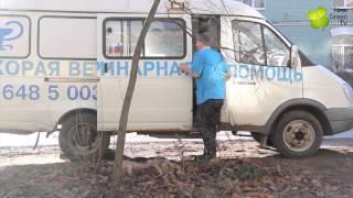 Скорая Ветеринарная помощь Санкт-Петербург(, 2014-10-22T12:51:08.000Z)