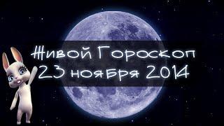 Смешная Зайка Zoobe - гороскоп для КОЗЕРОГОВ ♑. + Ржачный прикол!