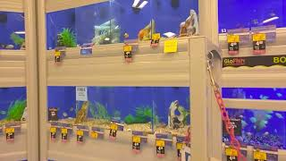 Shopping for New Fish! (Surprise)