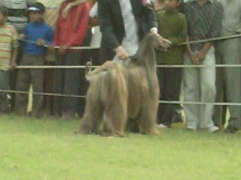 All India All Breed Dog Show