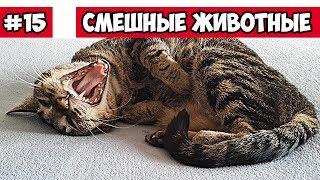 Сон кота, танцующие собаки, смешные животные   Bazuzu Video ТОП подборка июнь 2017