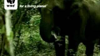 Słoń indyjski