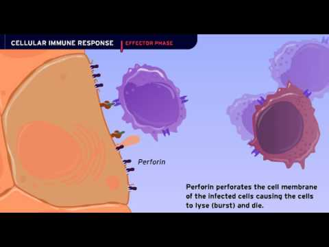 The Cellular Immune Response