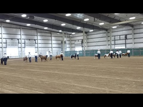 2017 Lancaster County Super Fair - 4-H Miniature Horse Show (already in progress)