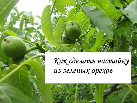 Настойка из грецких орехов. Орех грецкий (зеленый) и его