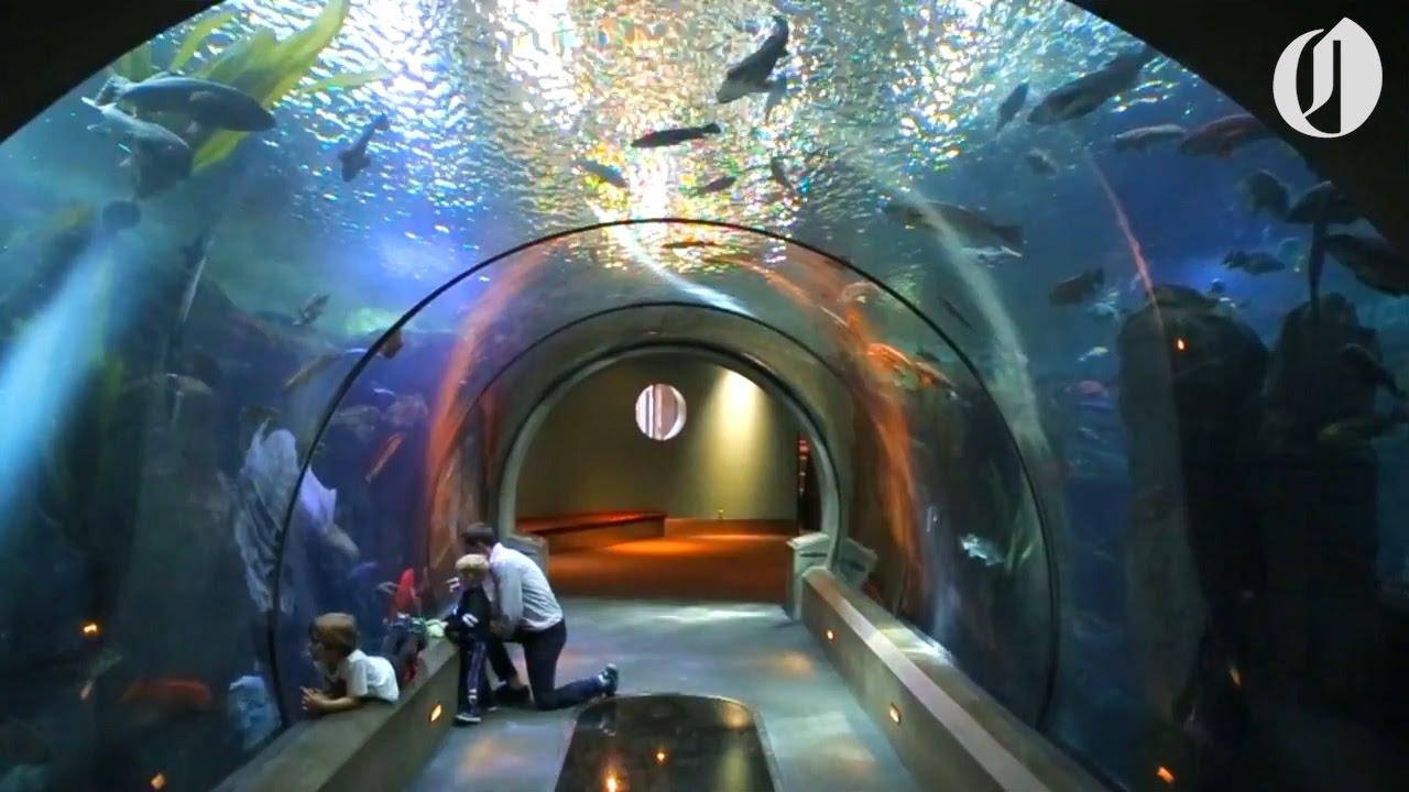 The Oregon Coast Aquarium Turns 25