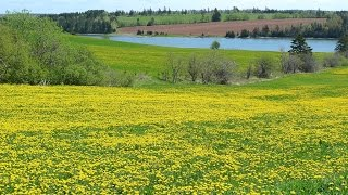カナダ プリンスエドワード島の景色 Canada Prince Edward Island