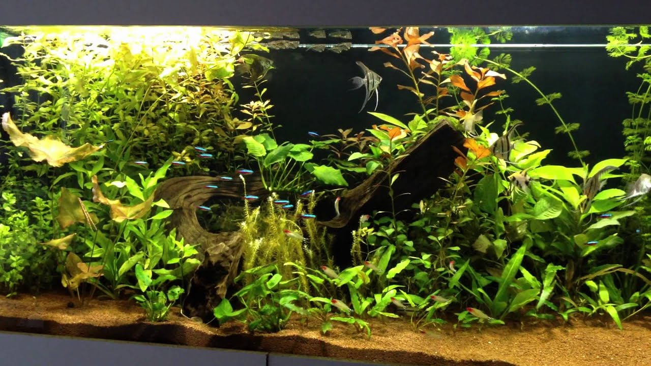 Aquarium amazonien 600l youtube for Aquarium 600l