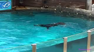 Samgoshare xem hải cẩu biểu diễn tại sở thú Sydney !