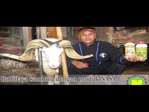 Download Budidaya Kambing, 082138373443 ternak kambing , Cara Menggemukan Kambing, nutrisi Kambing, Penggemuk