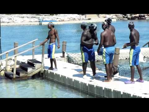swimming with sharks in jamaica