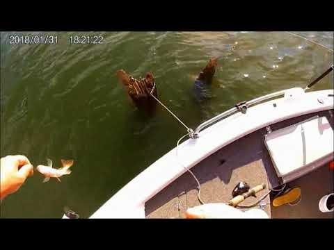 Burrinjuck Bait Fishing