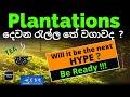 දෙවන රැල්ල තේ වගාවද ? |Will Plantations be the next hype in Stock Market?| Be Ready | Tea Prices UP