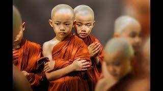 Sabios Consejos Budistas para dejar de sufrir - Ciencia del Saber