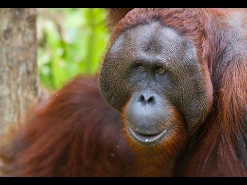 Wilds of Borneo | Wildlife & Adventure Travel in Borneo