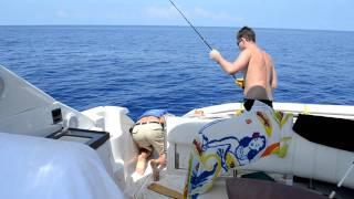 Bahamas Mahi Mahi Fish Escapes