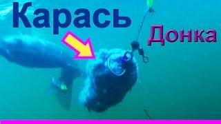 Ловил карася на донку. Подводная съемка, рыбалка онлайн. Ловля карася. fishing