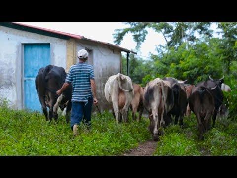 Venezuela farmers struggle to get food to markets