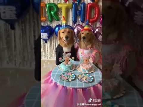 Dog Series: When dogs celebrate birthday