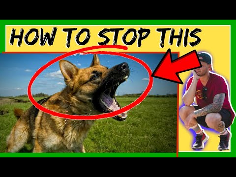 How to train aggressive german shepherd- Reactive dog training