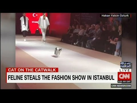 Cat Steals Fashion Runway